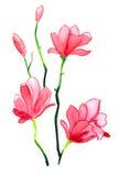 Aquarellblüte Stockfotos