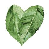 Aquarellblatt im Herzsymbol Stockfotografie