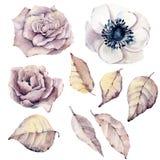 Aquarellblumen eingestellt Stockbilder