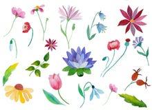 Aquarellblumen eingestellt Stockfoto