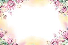 Aquarellblumendekorationsfrühlings-Sommerhintergrund mit Blüte Proteablume Heiratsdekorationsrahmen mit Blumen vektor abbildung