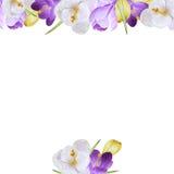 Aquarellblumenkarte mit Krokussen Stockbild