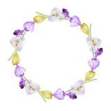 Aquarellblumenkranz von Krokussen Lizenzfreie Stockfotos