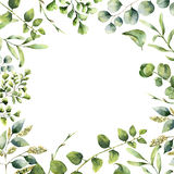 Aquarellblumenrahmen Handgemalte Betriebskarte mit den Eukalyptus-, Farn- und Frühlingsgrünniederlassungen lokalisiert auf Weiß Stockfotografie