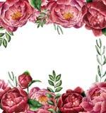 Aquarellblumenrahmen mit Pfingstrose und dem Grün Handgemalte Grenze mit Blumen mit Blättern, Niederlassung des Eukalyptus und Stockfoto