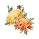 Aquarellblumenstrauß der Chrysantheme Lizenzfreie Stockfotos