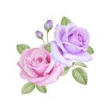 Aquarellblumenstrauß von Rosen Stockbild