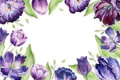 Aquarellblumentulpe backgraund Lokalisierte bunte Frühlingsillustration Violette Tulpenanlage des Watercolour purpurrot stock abbildung