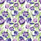 Aquarellblumentulpe backgraund Nahtloses buntes Frühlingsmuster Violette Tulpenanlage des Watercolour Purpurrote Blüte lizenzfreie abbildung