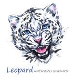Aquarellbrüllenleopard auf dem weißen Hintergrund Afrikanisches Tier Kunstillustration der wild lebenden Tiere Kann auf T gedruck vektor abbildung