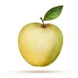 Aquarelle Apple Image libre de droits