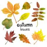 Aquarelle Autumn Leaves Set Images libres de droits