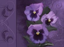 Aquarelle avec des fleurs de pensées illustration libre de droits