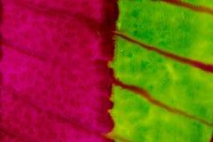 Aquarelle avec rose et vert au néon avec les lignes dragmarble Image libre de droits
