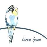 Aquarelle colorée d'illustration de perroquet illustration de vecteur