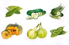 Aquarelle d'illustration de Vegetabl Backgronds images libres de droits