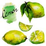 Aquarelle de citron Photographie stock