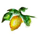 Aquarelle de citron Photo libre de droits