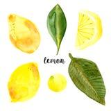 Aquarelle de collection de citron, logo illustration stock