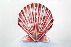 Aquarelle de coquillage Photos stock