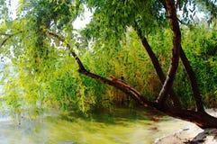 Aquarelle de dessin Forêt, branches d'arbre, lac et ciel photos libres de droits
