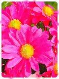 Aquarelle de Digital des fleurs roses de pollen de marguerite Photographie stock libre de droits