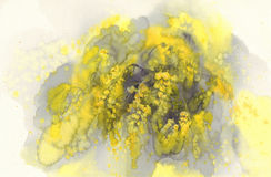 Aquarelle de fleur de mimosa Images libres de droits