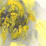 Aquarelle de fleur de mimosa Photo stock