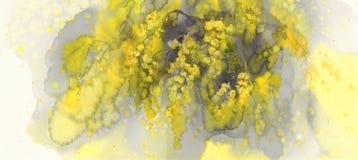 Aquarelle de fleur de mimosa Image stock