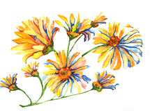 Aquarelle de marguerites Photo stock