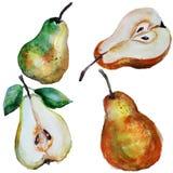 Aquarelle de poires Photos libres de droits