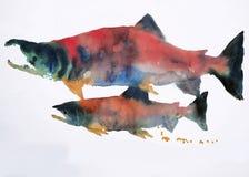 Aquarelle de saumons de Sokeye Photographie stock