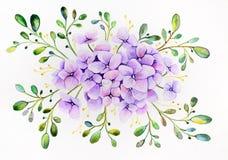 Aquarelle originale - bouquet des hortensias avec les feuilles vertes sur un fond blanc, horizontal illustration de vecteur