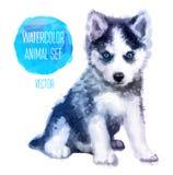 Aquarelle peinte à la main de chiens de traîneau de vecteur Image libre de droits