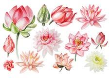 Aquarelle réglée avec des fleurs de lotus Photo libre de droits