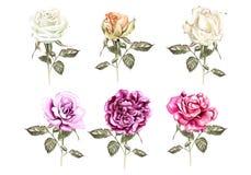 Aquarelle réglée avec différentes roses Images libres de droits