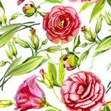 Aquarelle rose d'Irlandais, bourgeon Photo stock