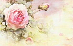 Aquarelle rose et bourgeons illustration stock