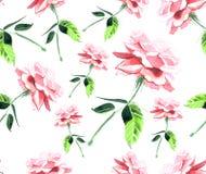 Aquarelle sans couture de modèle de belle rose de rose Photographie stock