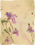 Aquarelle sketch of irises Stock Photos