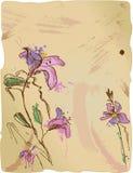 Aquarelle sketch of irises Stock Photos