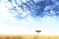 Aquarelle solitaire d'arbre de Mara de masai Images libres de droits