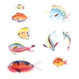 Aquarelle tirée par la main Images libres de droits