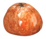 Aquarelle tirée par la main de mandarine, sur un fond blanc Illustration illustration de vecteur