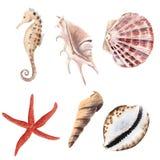 Aquarelle tirée par la main réglée avec des coquilles, des étoiles de mer et l'hippocampe d'isolement photo stock