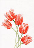 Aquarelle. Tulipes. Photographie stock