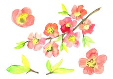 Aquarelles Sakura Illustration de Vecteur