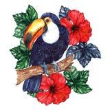 Aquarellexotischer tropischer Tiervogeltukan-Blumenhibiscus stock abbildung