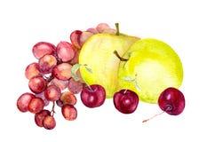 Aquarellfrüchte: Apfel, Traube, Kirsche watercolour Stockbild