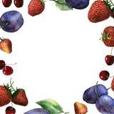 Aquarellfrucht- und -beerenrahmen der Kirsche, der Erdbeere und der Pflaumen Stockfotografie